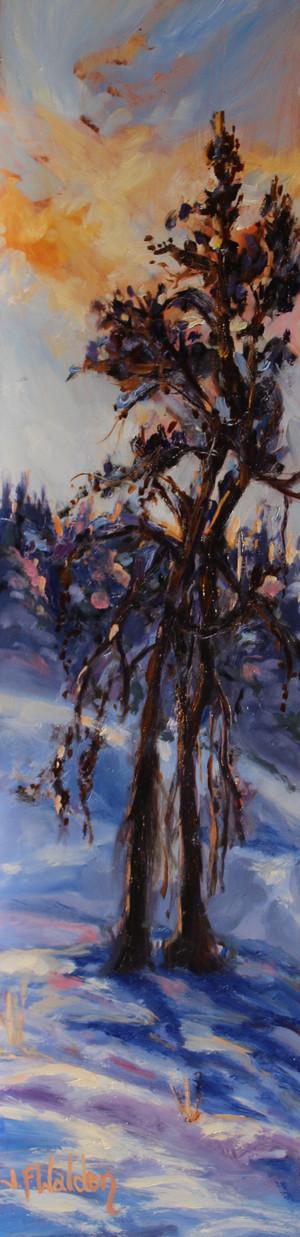 Kam Lake Tree Portrait