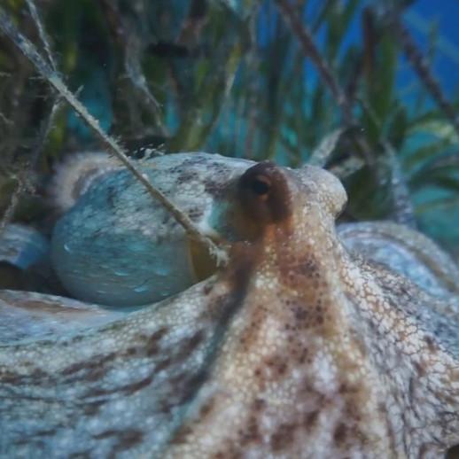 Adriatic Sea - Vis