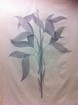 Bahamas Grisaille Botanical on canvas 6ft by 4ft