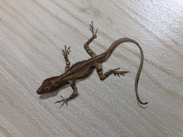 Trompe L'oeil lizard on floor