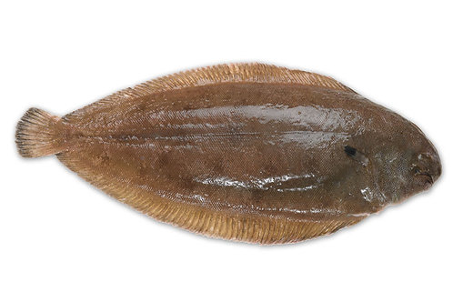 500g Dover Sole