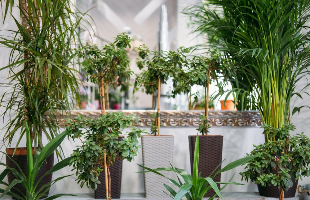 Biophilic Interior design incorporating a variety of plants