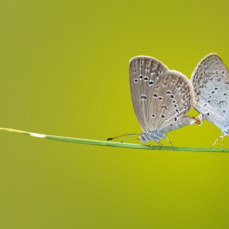 Da crisalide a farfalla: dalle prove più dure possiamo uscirne trasformati