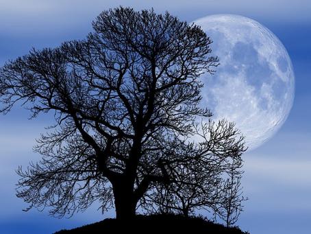 Oggi 9 marzo 2020 nel cielo c'è una super luna piena