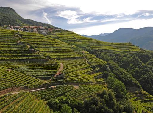 Valle di Cembra: i vigneti terrazzati nel registro nazionale dei paesaggi storici