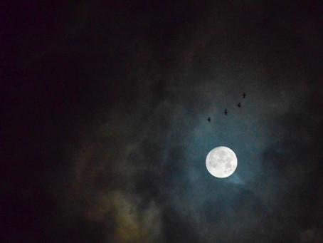 Oggi una magnifica Luna piena in Gemelli e una quasi eclissi