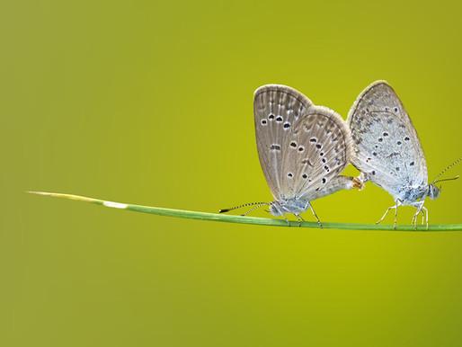 Da crisalide a farfalla