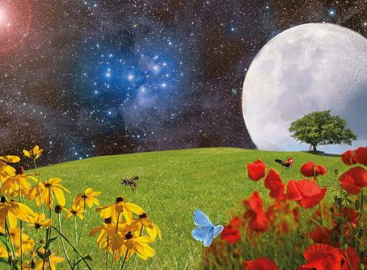 Equinozio di primavera: il momento della rinascita