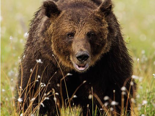 """Centa San Nicolò: domani sera """"l'orso non è invitato"""""""