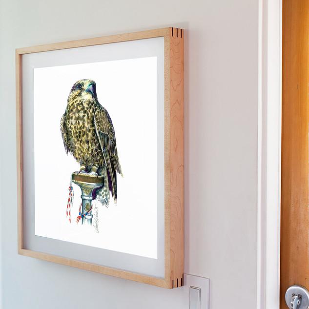 Brown Falcon W.jpg