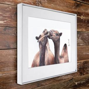 W•_Camelsharebone.jpg