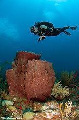 The island of Saba's pristine coral reefs.