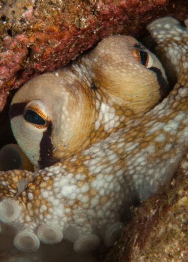 Saba's shallow dive sites