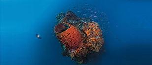 "Saba's pristine reef pinnacle - ""The eye of the needle""."