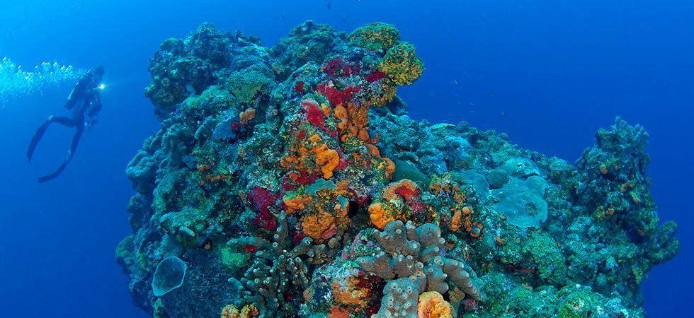 Adventure Dive - Diving Saba's coral encrusted pinnacles.