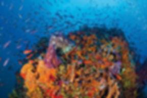 Saba Caribbean Diving