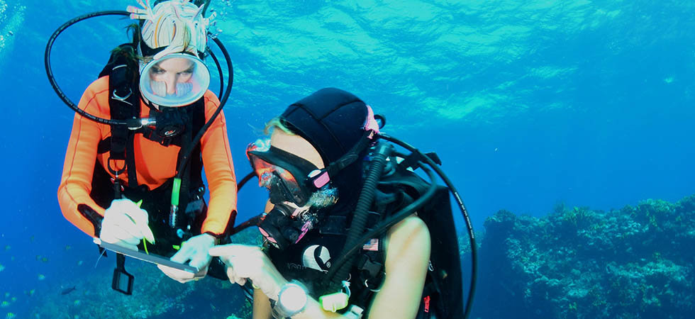 PADI Underwater Naturalist - This course starts with the basics of marine life identification providing the tools and know how to take your learning to a next level.