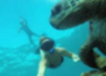 Dive Saba on a snorkel tour.