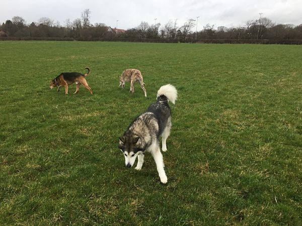 dog walker harrogate