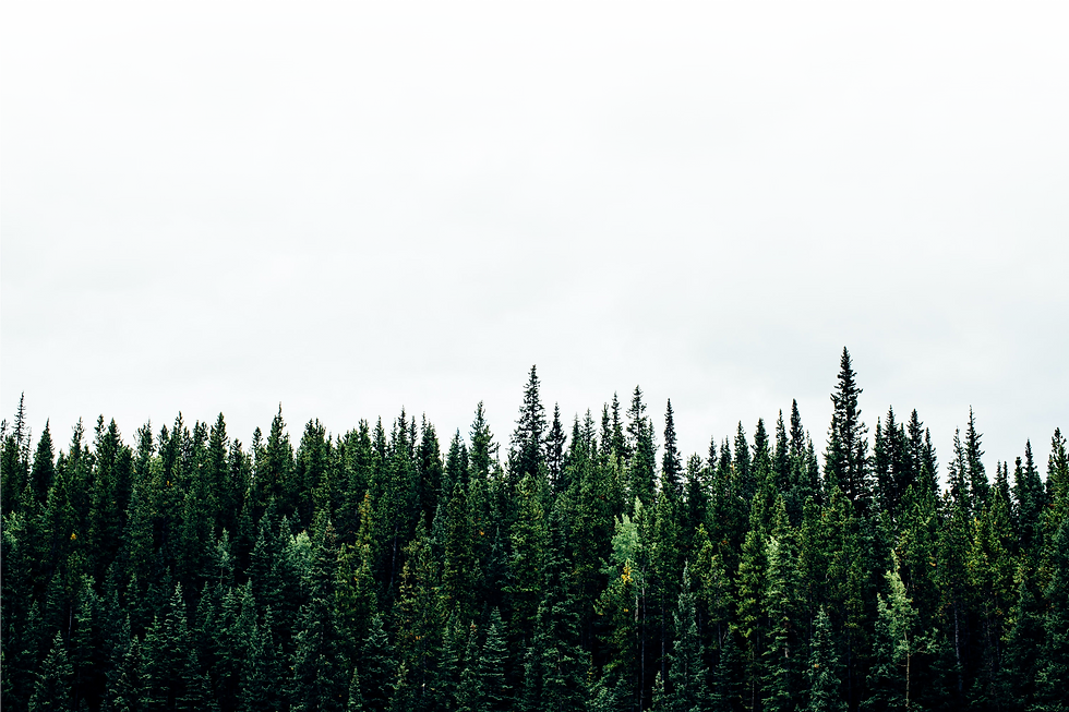 trees background.png