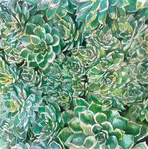 Adele van Heerden - Succulents