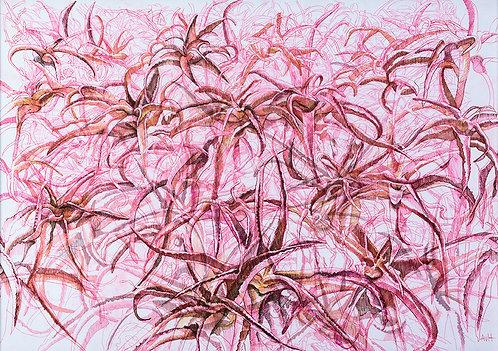 Adele van Heerden - Abstract Alien Aloes