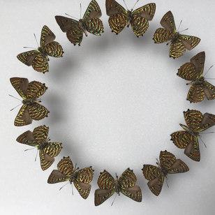 Ronde de papillons