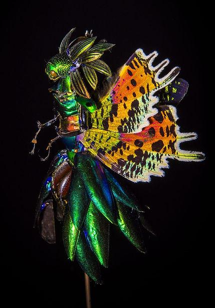 Fairy Black 5.JPG