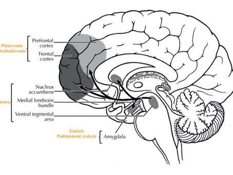 Veda v joge No 1. Neuroplasticita