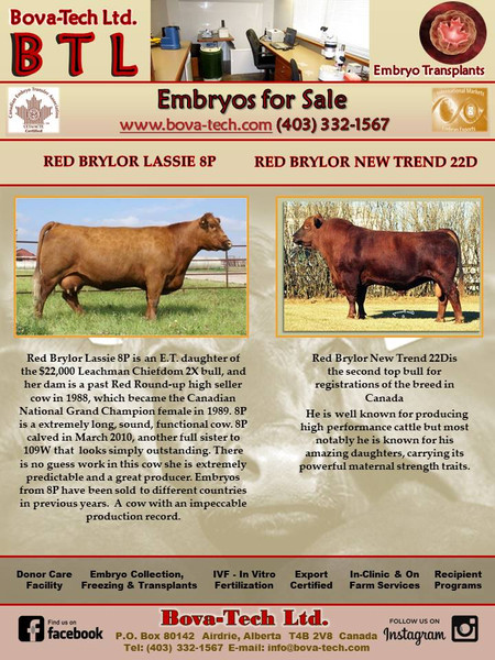 Red Brylor Lassie 8P  x  Red Brylor New Trend 22D