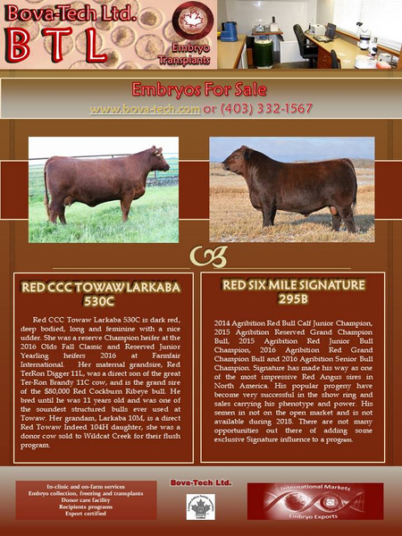 Red CCC Towaw Larkaba 530C  x  Red Six Mile Signature 295B