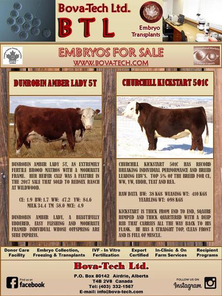 Dunrobin Amber Lady 5T  x  Churchill Kickstart 501C