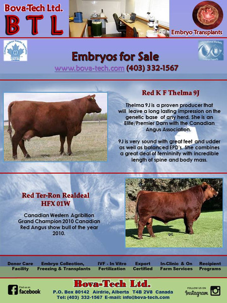 Red K F Thelma 9J  x  Red Ter-Ron Realdeal HFX 01W