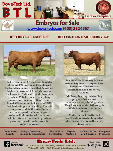 Red Brylor Lassie 8P  x  Red Fine Line Mulberry 26P