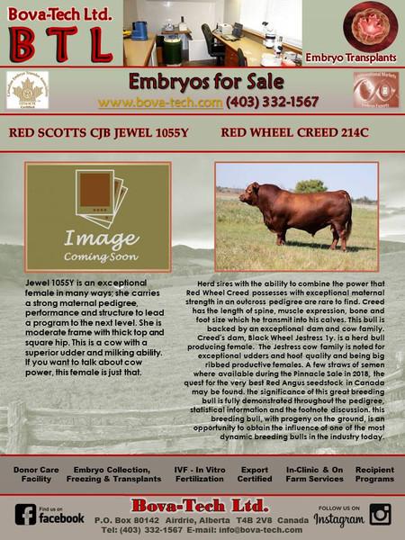 Red Scotts CJB Jewel 1055Y  x  Red Wheel Creed 214C