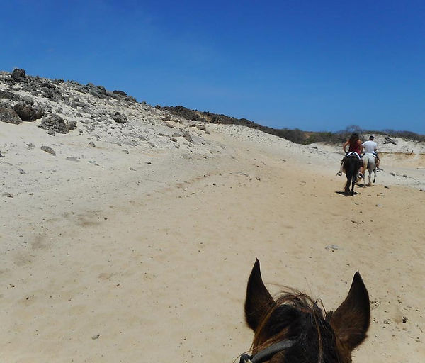 HorsebackRiding_Aruba.jpg