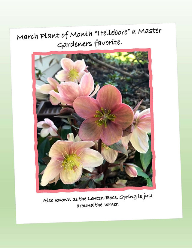 plant of the month march.jpg