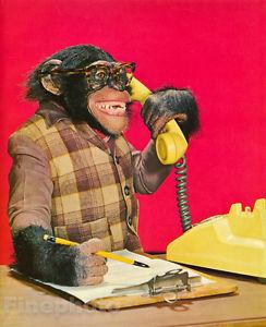 Monkey telephone.jpg