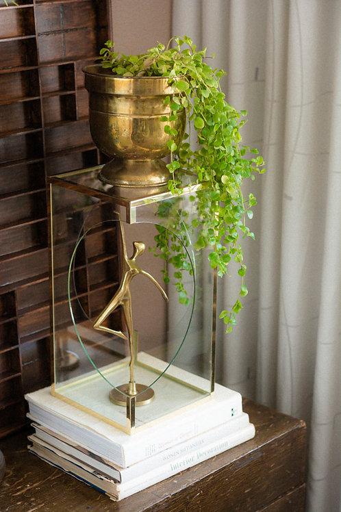 Vitrine kastje met goudkleurige details
