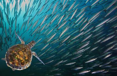 Amazing underwater worlds