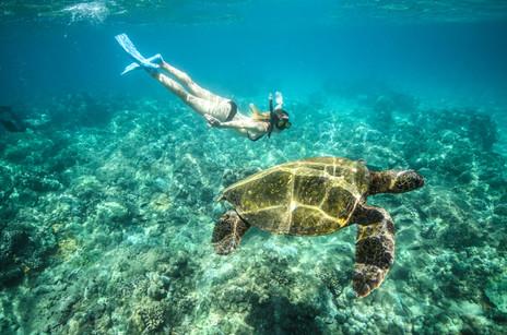 Snorkel in crystal clear waters