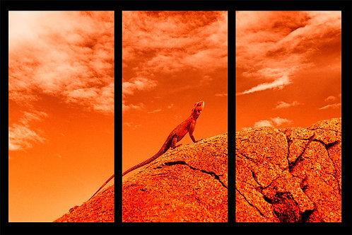 Orange lizard, Serengeti