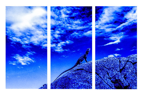 Blue lizard, Serengeti