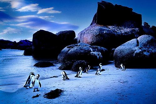 penguins blue fine art print deco design interior photo photography south africa simons town
