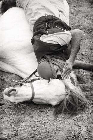 Horse whispering, Fes