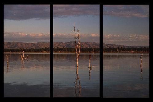 Tree, Lake Kariba