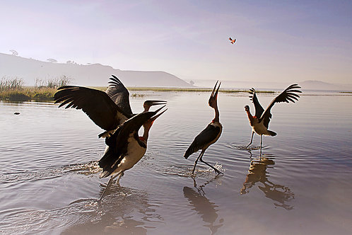 ethiopia africa lake alaska birds tranquil travel suzanne porter art photo photography colour deco