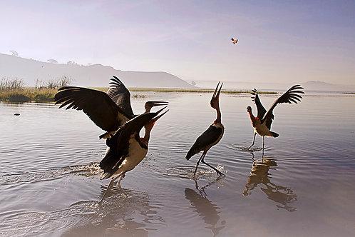 ethiopia africa lake alaska birds tranquil travel suzanne porter art photo photography colour deco