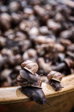 Snails, Marrakech