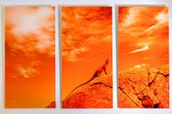 orangelizard6G0A5427.jpg